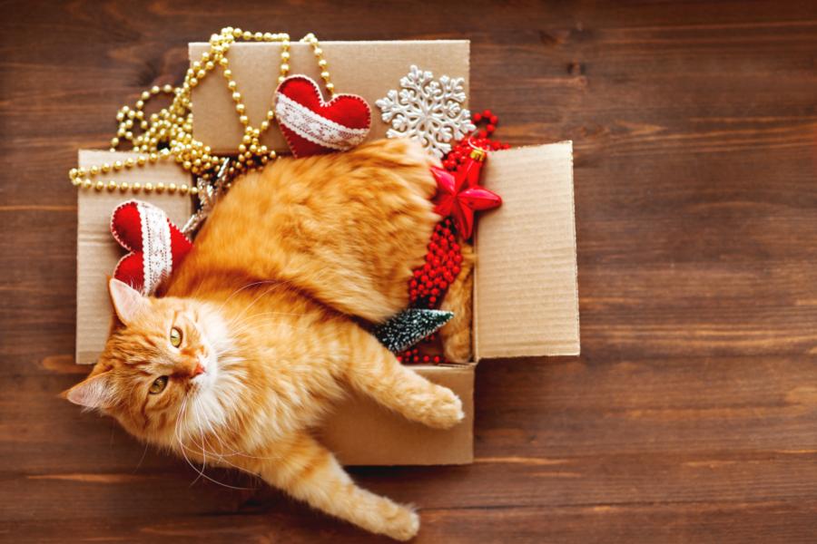 Cat enjoying the holiday season, free from financial stress.