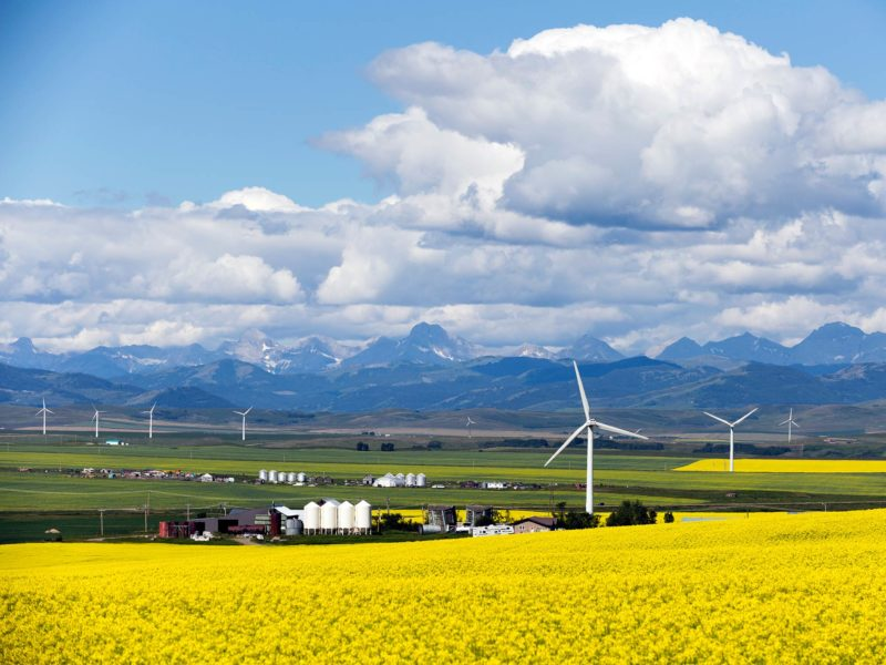Wind farm turbines in yellow canola fields in Alberta with mountains in the distance and blue skies